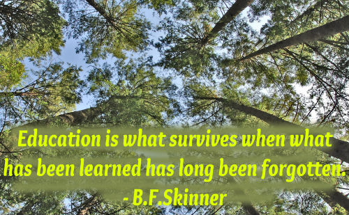 An education quote by B.F.Skinner.