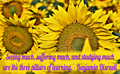 An education quote by Benjamin Disraeli.